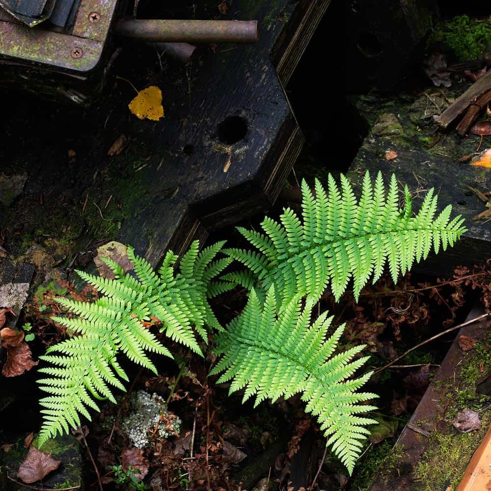 Végétation 0017