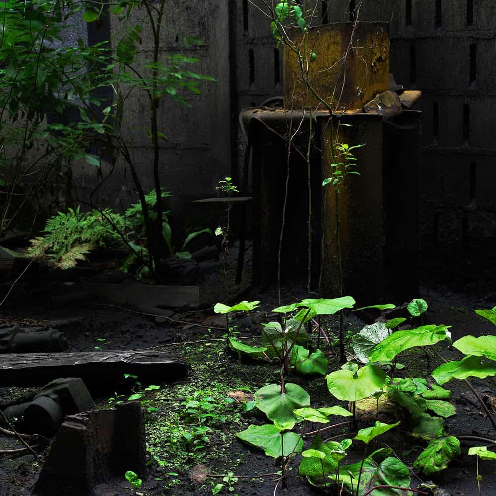 Végétation 0024